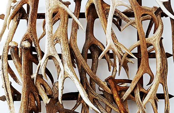 antler-wall